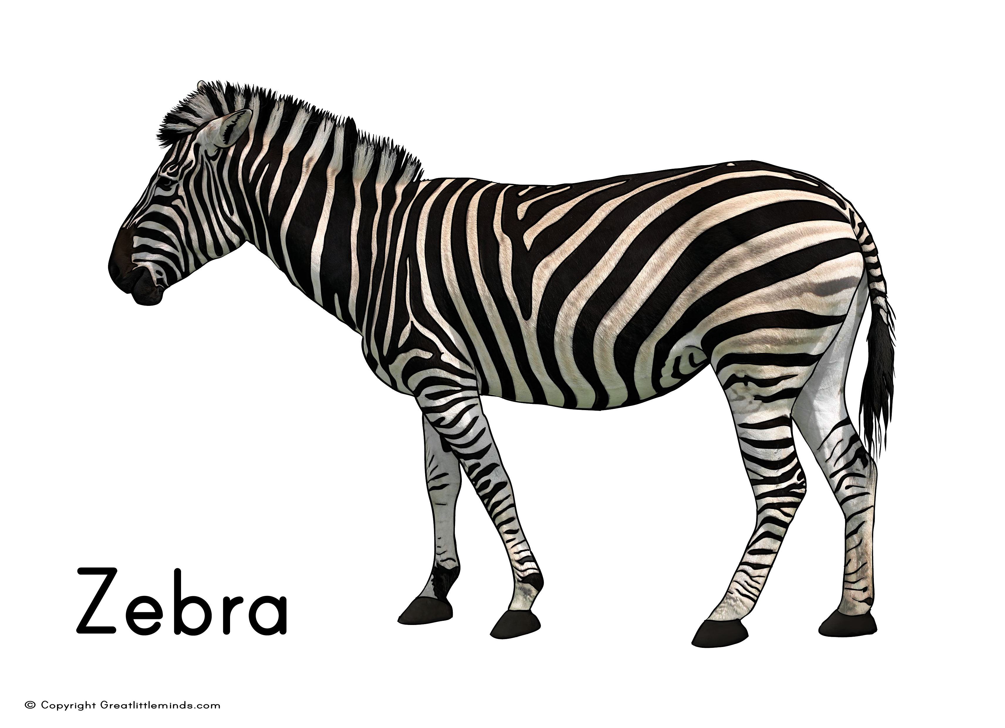 zebra print heart coloring pages - photo #36