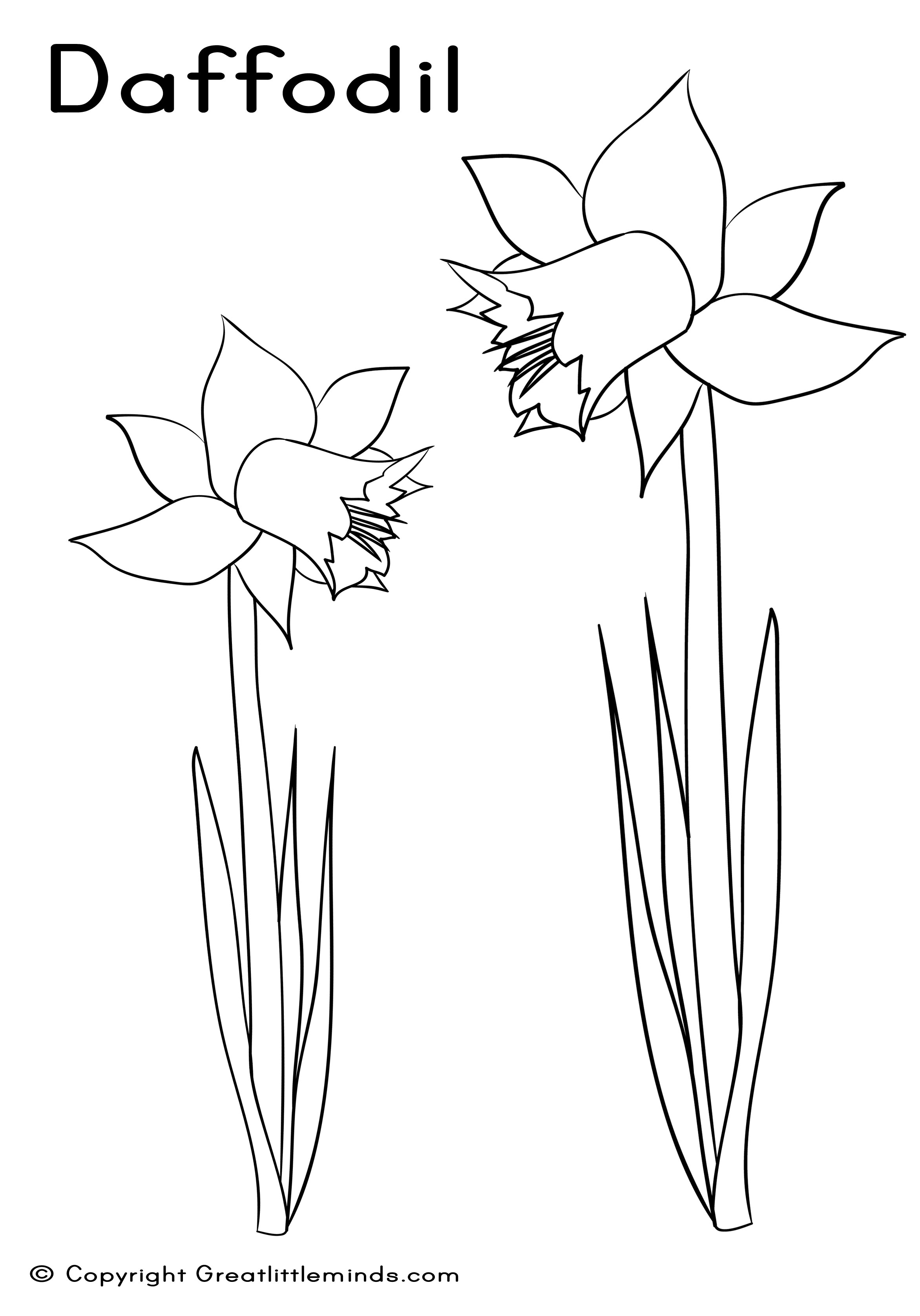 Daffodil Clipart Black And White