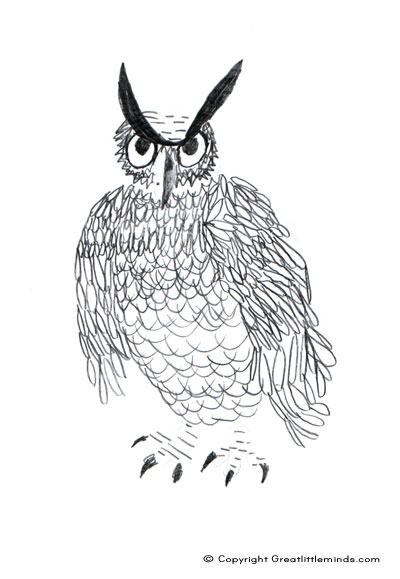 owl long eared